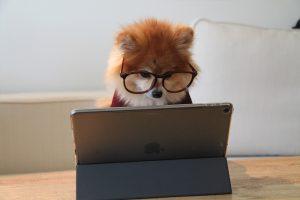 כלב מסתכל במחשב